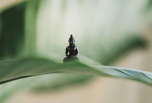 Retiro de Meditación (Otoño 2021)